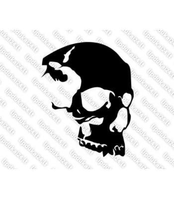 Kaukolė iš šono 17
